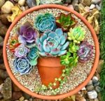 Surprised by succulents